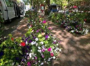 Six hundred baskets of flowers were hung all over Pioneer Square on May 20, 2014.