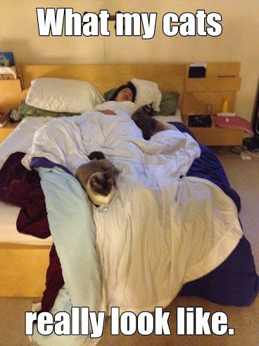 Woman (and author of post) laying in bed sleeping under white covers, with two Siamese cats seeping on a pillow and on her foot.