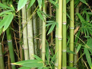 Learn to be the bamboo. Photo from Creative Commons.